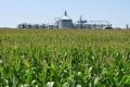 China's interest in buying US agricultural products will be supported by a personal visit by a member of China's negotiating team to Midwestern farm states next week. Photo: Reuters