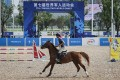 More than 100 horses have arrived in Wuhan for the equestrian and modern pentathlon events of the Military World Games, which begin on Friday. Photo: Handout