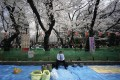Ueno Park, an oasis in the middle of bustling Tokyo during the Rugby World Cup. Photo: EPA