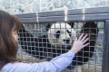 Bei Bei, the National Zoo's last panda cub, with Laurie Thompson, the zoo's assistant curator of giant pandas. Bei Bei is leaving for China. Photo: Amanda Voisard/The Washington Post