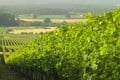 Nyetimber has grown into England's biggest sparkling wine producer, making more than one million bottles a year from vineyards across England's southeast.
