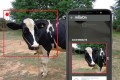 A facial recognition system for cows is just one of the ideas being tested in India's booming agritech industry.