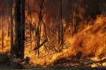 A fire burns near Tomerong, New South Wales, on Wednesday. Photo: AP