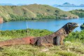 Labuan Bajo is a gateway to the popular Komodo National Park. Photo: Shutterstock