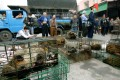Civet cats on sale at a market in Guangzhou in 2004. The practice of eating wild animals is centuries old in China. Photo: Dustin Shum