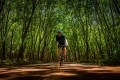 Cycling in Khanom, southeast Thailand, surrounded by rubber trees. Photo: Steve Thomas