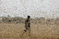 Locusts have ravaged crops in Pakistan, India and East Africa – and now Beijing is sensing a threat to China. Photo: Reuters