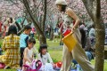 Families enjoy the cherry blossom in Yangming Park, Taipei. Photo: Chris Stowers/Panos
