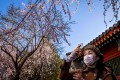 A woman wearing a face mask amid concerns over the spread of the novel coronavirus takes a photograph with her smartphone at a park in Beijing on March 14, 2020. Photo: AFP