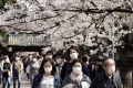 People wearing masks stroll under cherry blossoms at Ueno Park in Tokyo on March 22. Mask wearing in Japan became common after the 2011 earthquake, which caused a meltdown at a nuclear power plant, prompting fears about radioactive isotopes in the air. Photo: EPA-EFE