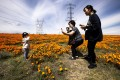A family takes pictures in a field of blooming poppies in Lancaster, California, on April 17. The new RT.live website, introduced by Instagram co-founders Kevin Systrom and Mike Krieger, is expected to help citizens understand whether they are in danger, as parts of the US economy reopen amid the Covid-19 pandemic. Photo: EPA-EFE