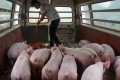 A spike in soybean prices has hit China's pig farmers who use the protein in animal feed. Photo: Reuters