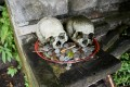Skulls on display with offerings at a cemetery in Bali's Trunyan village. Photo: AFP