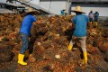Workers inspect palm oil fruits at a factory in Sepang, outside Kuala Lumpur, in this 2014 file photo. Photo: AFP