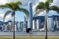 Central Hong Kong, as seen from the city's West Kowloon Waterfront Promenade. Hong Kong had more US dollar millionaires in 2018. Photo: Sam Tsang