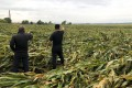 Farmer Bai (left) points across his flattened cornfield in Heilongjiang province, which was hit by heavy storms in recent weeks. Bai says some fields in the important corn-growing region may not yield any harvest this year. Photo: Orange Wang