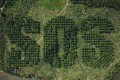 A giant SOS carved into an oil palm plantation in Sumatra by Lithuanian artist Ernest Zacharevic, to draw attention to the damage caused by deforestation to wildlife and indigenous people in Indonesia. Picture courtesy: Ernest Zacharevic