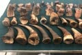 Nearly 83kg of suspected rhino horn and cut pieces, with an estimated market value of about HK$16.5 million, seized by Hong Kong customs officers from transshipment cargo at the city's airport on April 5, 2019, a record haul of products related to the endangered species. Photo: ISD
