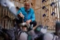 One of Yu Yuguang's pigeons recently won a race in record time. Photo: Reuters