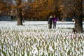 """People are surrounded by a sea of white flags planted in memory of coronavirus victims in an art installation titled """"In America how could this happen..."""" in Washington on December 1. Photo: AFP"""