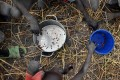 """Children collect grain spilled onto a field following a food drop from a UN plane in a village in Ayod county, South Sudan. The World Food Programme has warned that 2021 will be """"the worst year of humanitarian crisis"""" since 1945. Photo: AFP"""