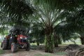 A mini tractor grabber collects palm oil fruits at a plantation in Pulau Carey, Malaysia in January. Photo: Reuters