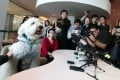 Jasper meets the press at the Lui Che Woo Law Library at the University of Hong Kong in 2017, the year he became the institution's therapy dog. Photo: Jonathan Wong