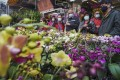 Customers check out festive blooms at the flower market in Prince Edward. Photo: Felix Wong