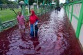 Residents wade through floodwaters dyed red from the waste of a batik factory in Pekalongan, central Java. Photo: AFP