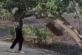 A six-second video shows a woman swinging around a dog tied to a branch of tree in Ma On Shan. Photo: Facebook.