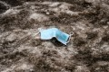 A discarded face mask lays on dirty snow in Berlin, Germany. Photo: EPA