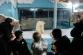Guests at the hotel photograph one of the bears in its enclosure. Photo: AFP