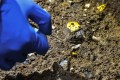 A number of thin gold discs have been found at pit No 5. Photo: Xinhua