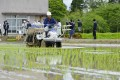 Rice seedlings are planted on a trial basis in Futaba, a Fukushima Prefecture town that co-hosts the crippled Fukushima Daiichi nuclear power plant. Photo: Kyodo