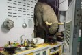 An elephant searching for food in the kitchen of a home in Pa La-U, Hua Hin, Thailand. Photo: Facebook account of Radchadawan Peungprasopporn / AFP