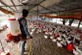 A worker sprays a poultry farm amid an H5N1 alert in Bhopal, India. Photo: EPA-EFE