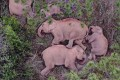 An aerial picture taken on June 24 and released by the Yunnan Forest Brigade shows a migrating herd of wild Asian elephants sleeping in the southwestern province. Photo: Handout