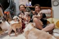 Kim Young-suk and Kim Gea-yeung with abandoned dogs and cats, including Jin-hui, a five-year-old Pomeranian who was buried alive. Photo: Reuters