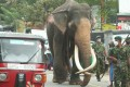 A royal elephant walks down a street on its way to Kandy, Sri Lanka's second largest city, to take part in a religious festival earlier in August. Photo: Xinhua