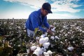 China stepped up imports of Australian cotton and copper this year, despite imposing an unofficial ban on the products last November. Photo: Bloomberg