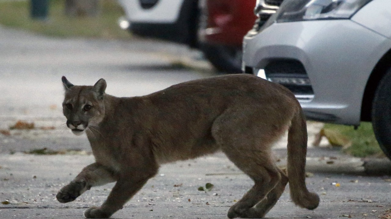 Coronavirus: wild animals take back world's empty city streets as people stay indoors
