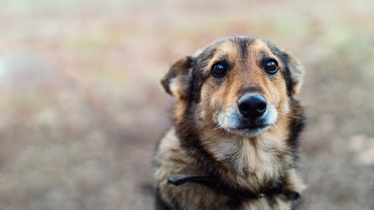 Yelling at your dog can negatively affect its mental health