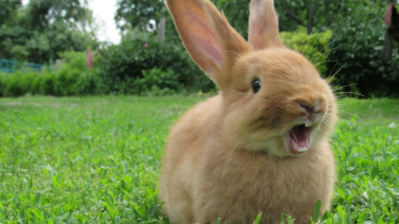 7 things your pet rabbit does and what they mean