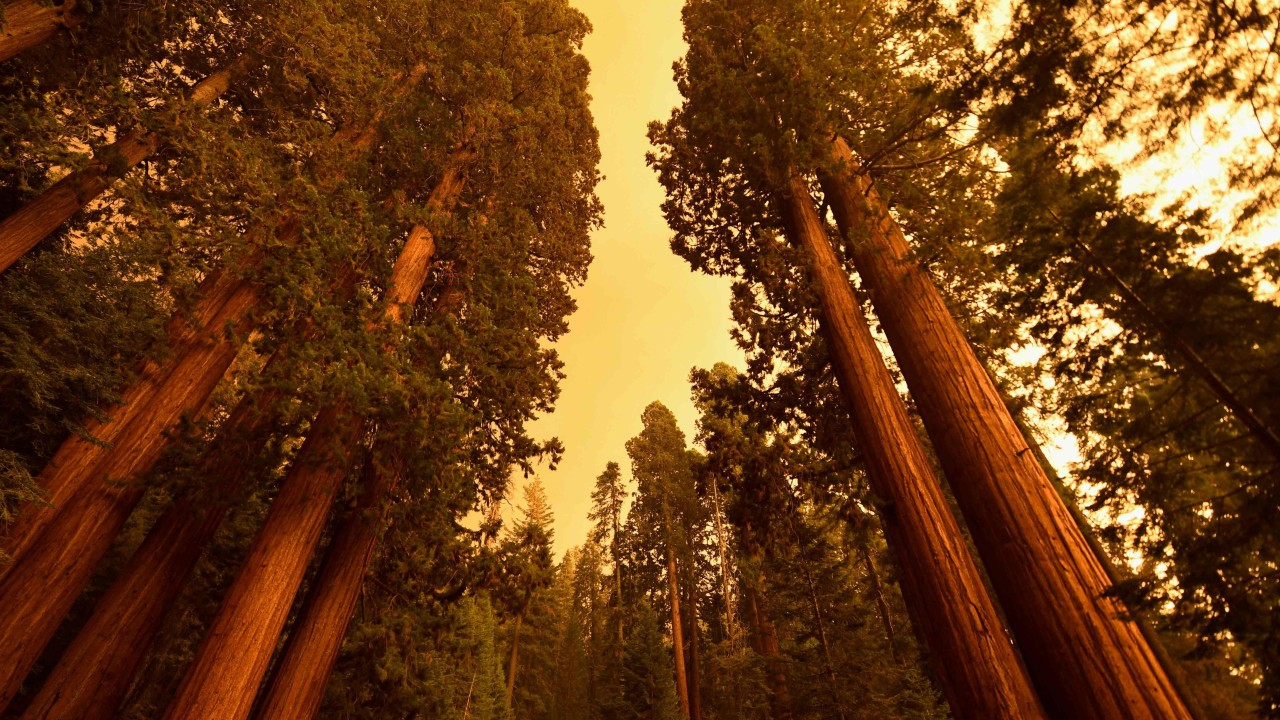 Firefighters battle to save General Sherman, the world's largest tree, as blazes ravage California