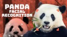 How does facial recognition work for pandas?