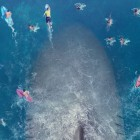 Is global box office smash The Meg pandering to China?