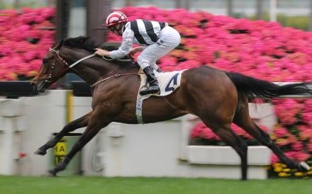 Dan Control wins his Hong Kong debut under Zac Purton. Photos: Kenneth Chan