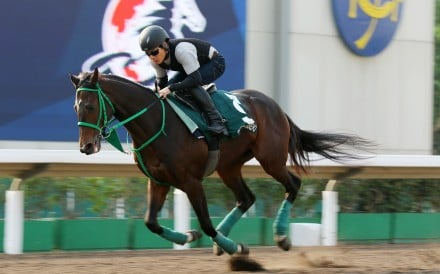 Kiseki gallops at Sha Tin in 2017. Photo: Kenneth Chan
