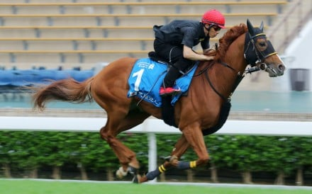 Happy Grin works underneath Takafumi Hattori at Sha Tin this week ahead of the Champions & Chater Cup. Photos: Kenneth Chan