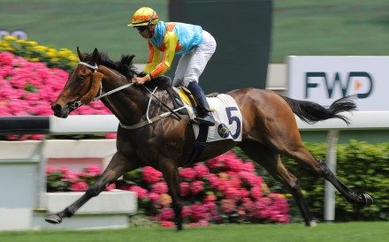 Ka Ying Star salutes at Sha Tin last month. Photos: Kenneth Chan
